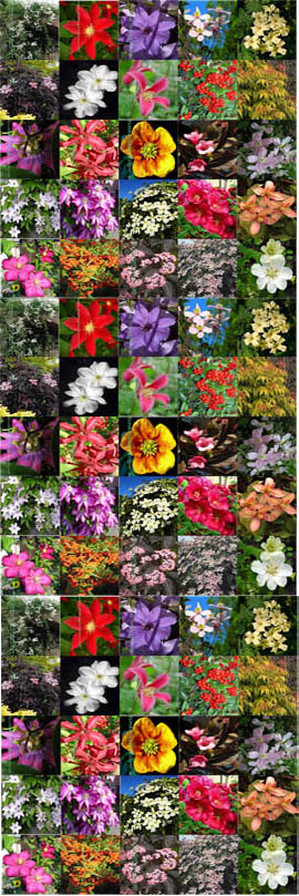12+PLANT+PROMOTION%2D+Choose+your+own+12+Established+Climbing+Plants+%2D+Pick+%27n%27+Mix