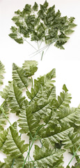 Artificial Leather Fern