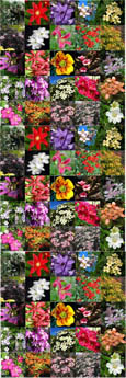 5 PLANT PROMOTION- Choose your own 5 Established Climbing Plants - Pick 'n' Mix