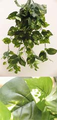 3x Artificial Silk Large Ivy Trailing Plants (Dark Leaf with a Light Cream Variegation Heart Shaped) 70CM Length & with 170+ Large Ivy Leaves